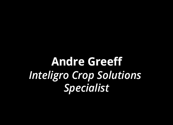 Andre Greeff